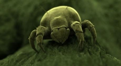Allergia agli acari sintomi diagnosi e cura blog for Acari polvere