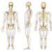 Salute delle ossa