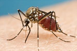 Trasmissione del virus Zika