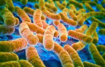 Superbatterio e antibiotico resistenza